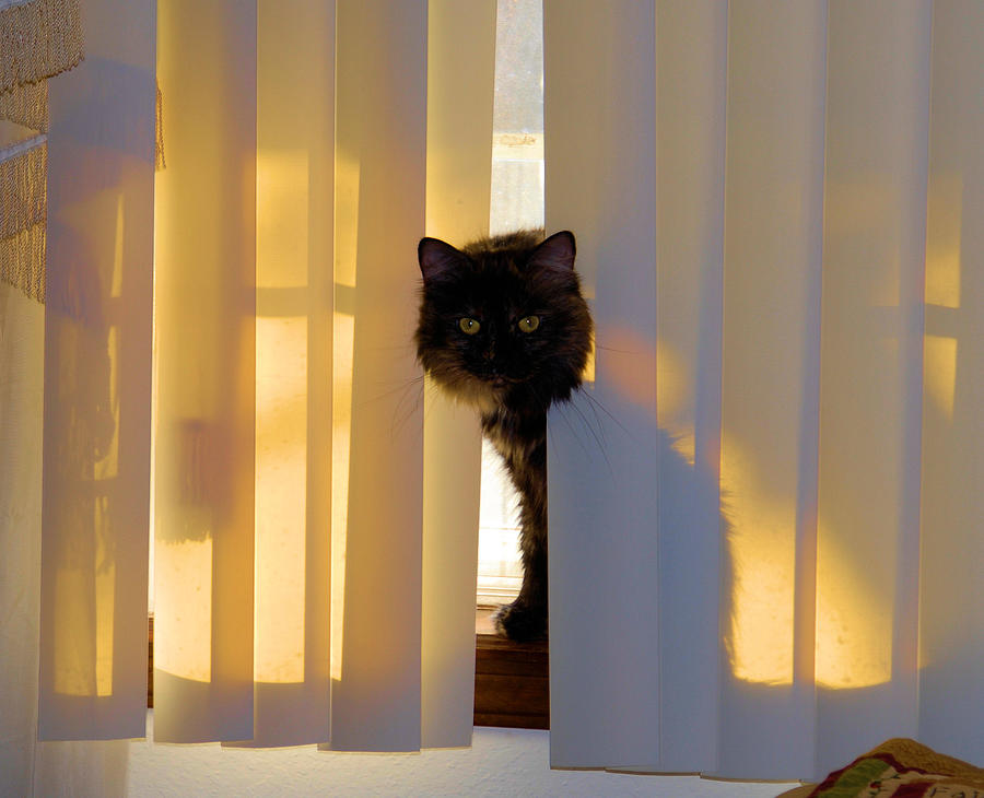 Cat Images Photograph - Golden Accents by Cheryl Poland
