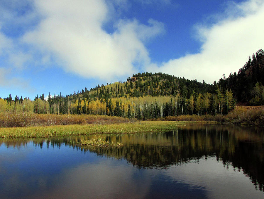 Golden Aspens and Clouds Reflected in a Colorado Pond by Julia L Wright