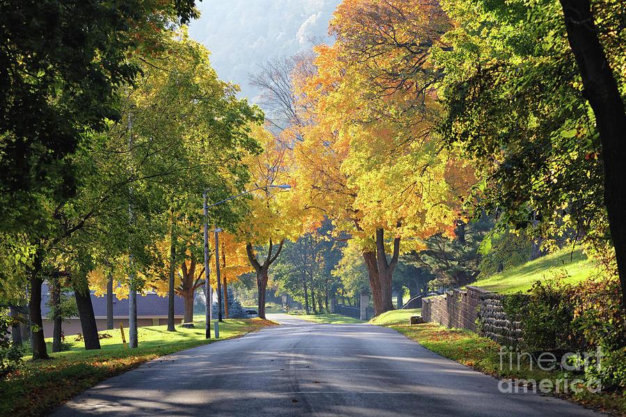 Golden Autumn Trees West Lake Boulevard Winona by Kari Yearous
