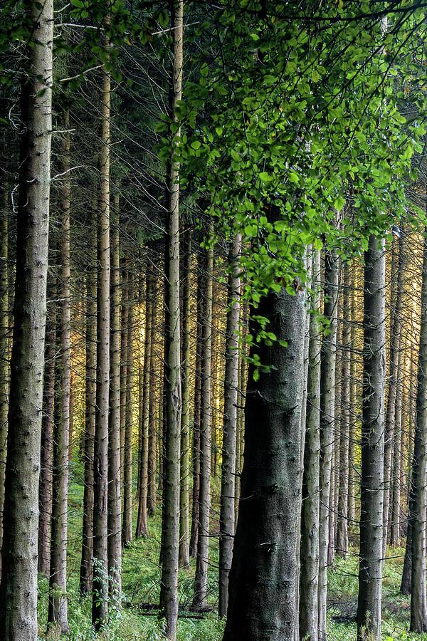 Autumn Photograph - Golden Backlight by Glen Sumner