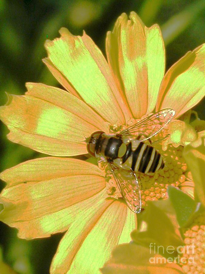 Bee Photograph - Golden Bee by Karol Livote