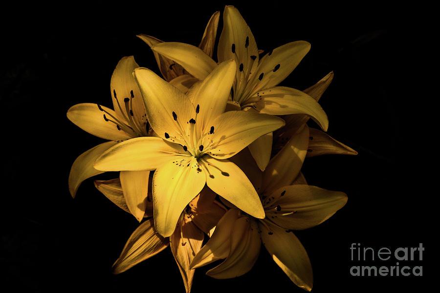 Golden Bloom Photograph