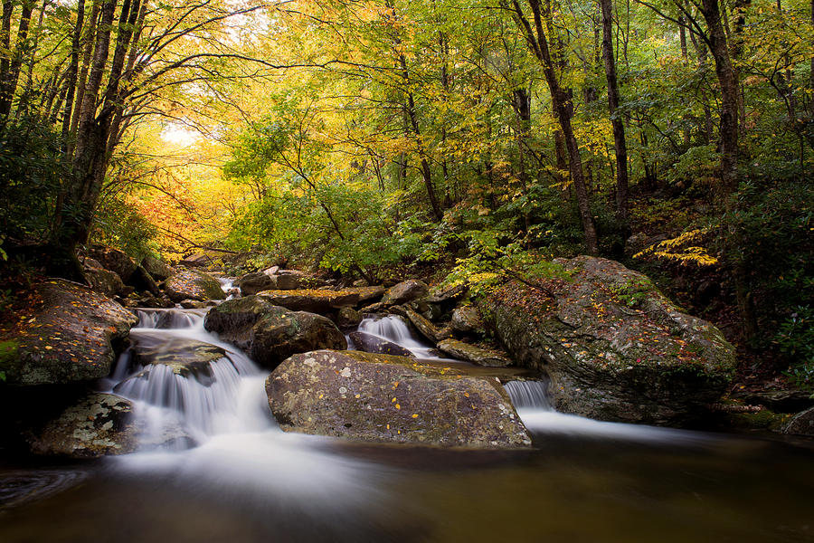 Golden Canopy, Boone Fork Creek by Tommy White