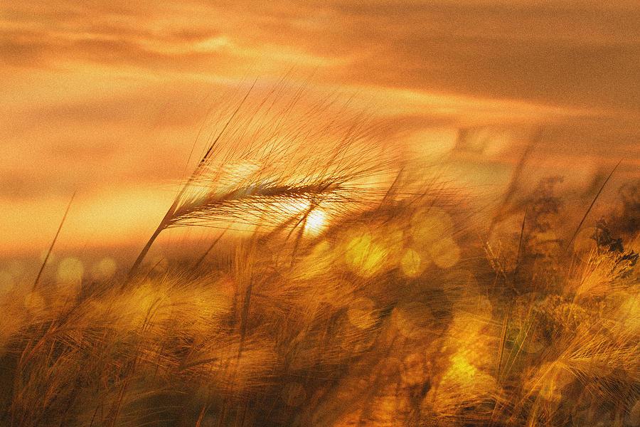 Golden Dream Photograph