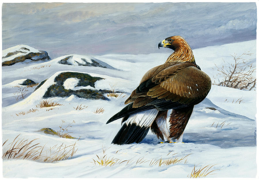 Bird Of Prey Painting - Golden Eagle by Dag Peterson