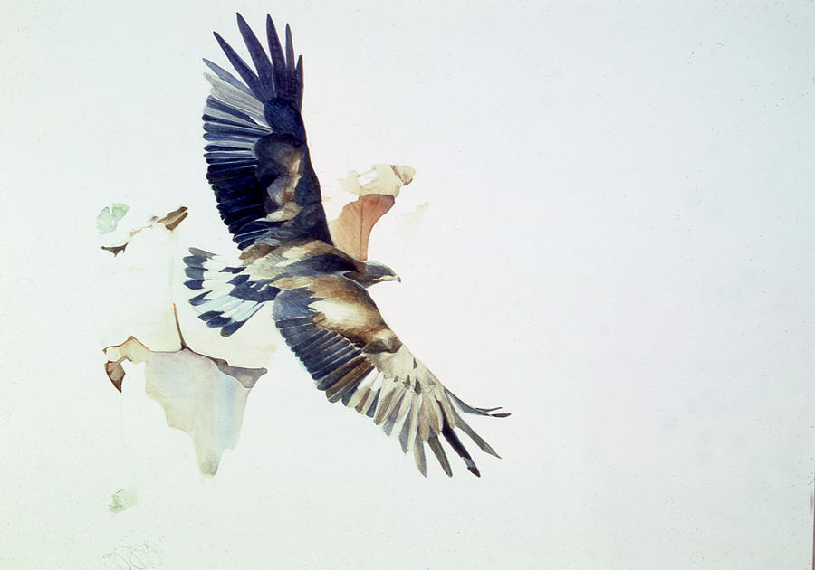 Eagle Painting - Golden Eagle by Greg Marquez