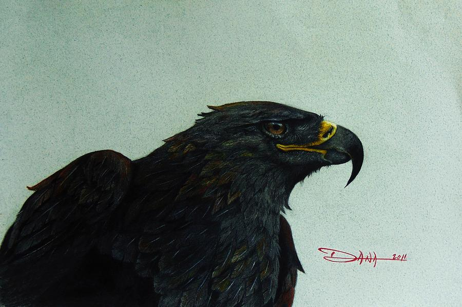 Birds Mixed Media - Golden Eagle- Head Study by Dana Newman