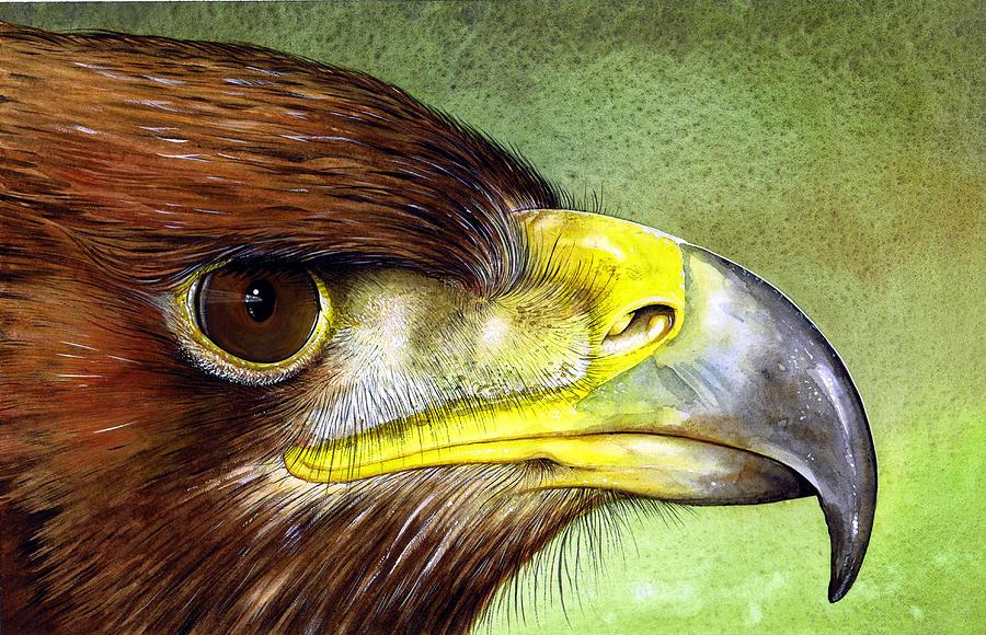 Wildlife Painting - Golden Eagle by Paul Dene Marlor