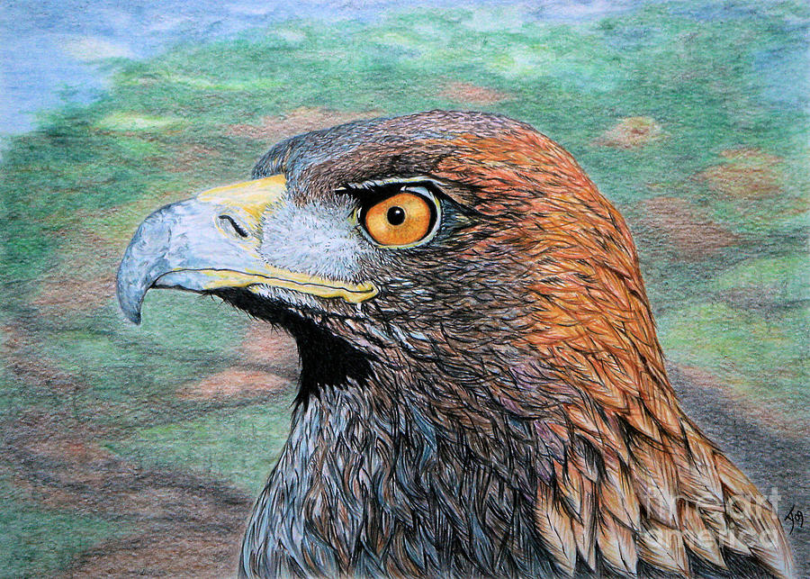 Golden Eagle Drawing - Golden Eagle by Yvonne Johnstone