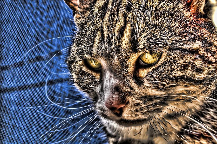 Cat.cats Photograph - Golden Eyes by Joetta West