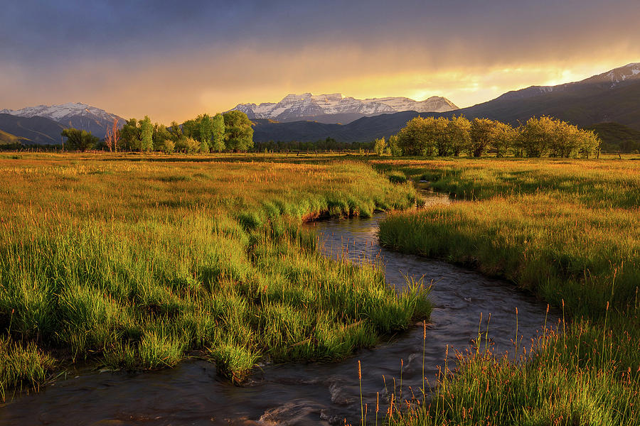 Golden field in Heber Valley. by Johnny Adolphson