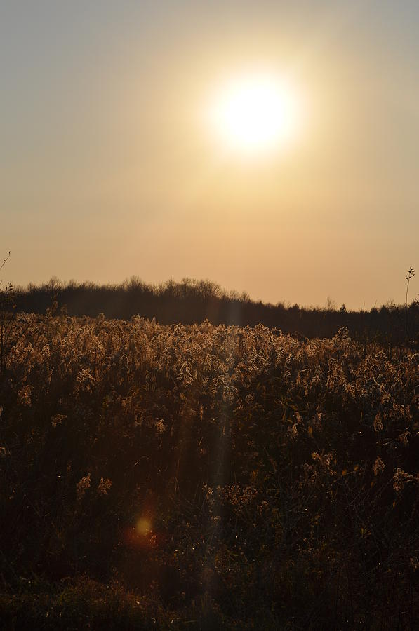 Golden Fields  Photograph by Mallory Jarosz