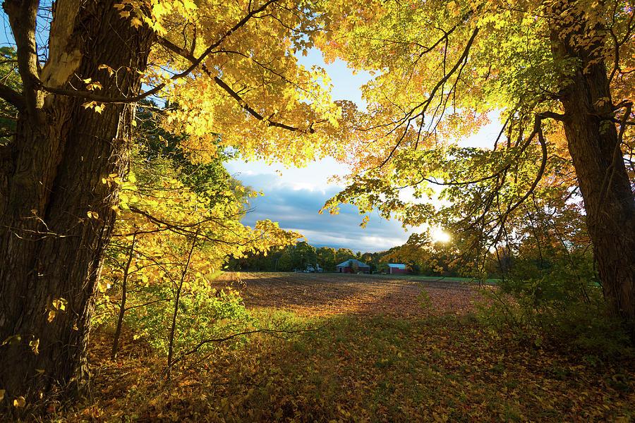 Golden Fields by Robert McKay Jones