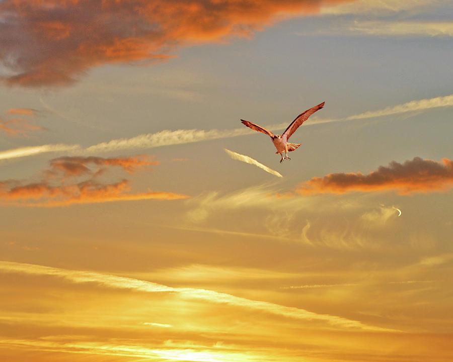 Sky Photograph - Golden Flight by Adele Moscaritolo
