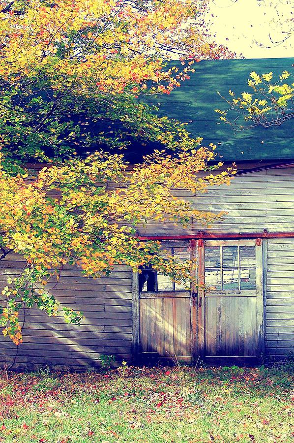 Fall Photograph - Golden Fall Foliage  by JAMART Photography