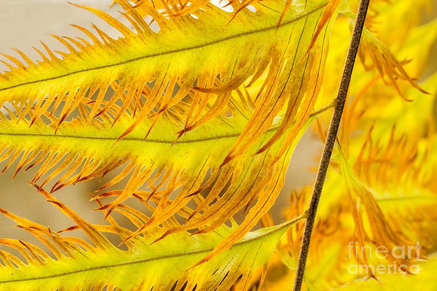 Botanic Gardens Photograph - Golden Fringes by Marilyn Cornwell