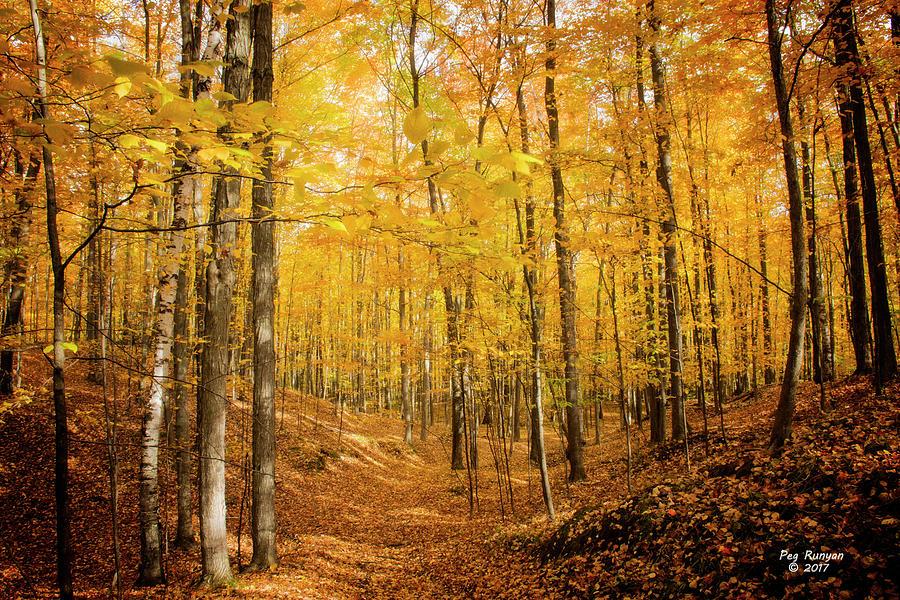 Autumn Forest Photograph - Golden Glory by Peg Runyan