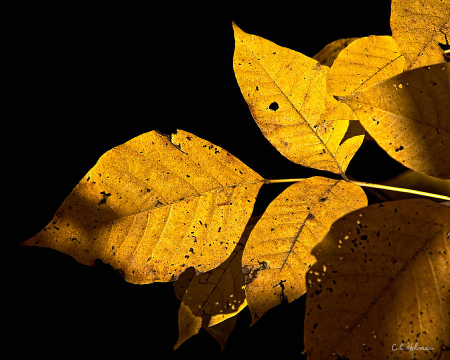 Gold Photograph - Golden Glow by Christopher Holmes