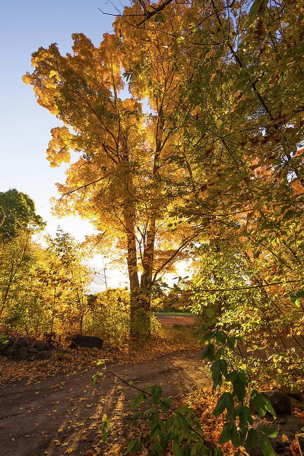 Golden Glow  by Robert McKay Jones