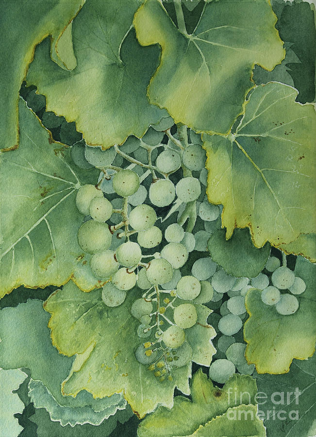 Watercolour Painting - Golden Green Grapes by Jackie Kirby