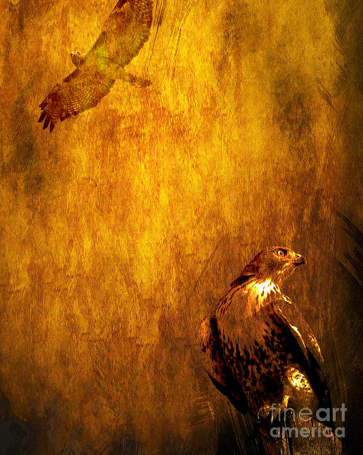 Red Tail Hawk Photograph - Golden Hawk 4 by Wingsdomain Art and Photography
