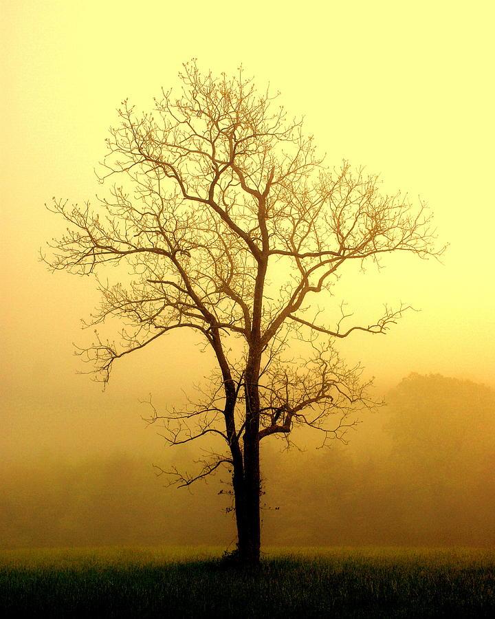 Tres Photograph - Golden Haze by Marty Koch