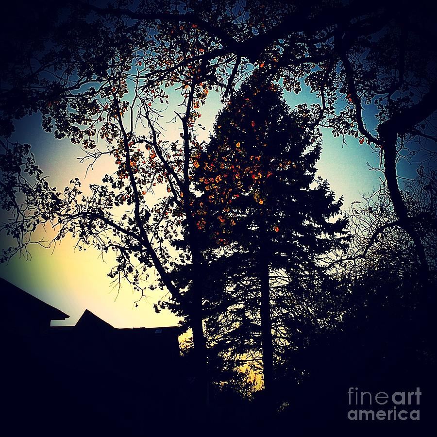 Golden Hour Foliage Photograph