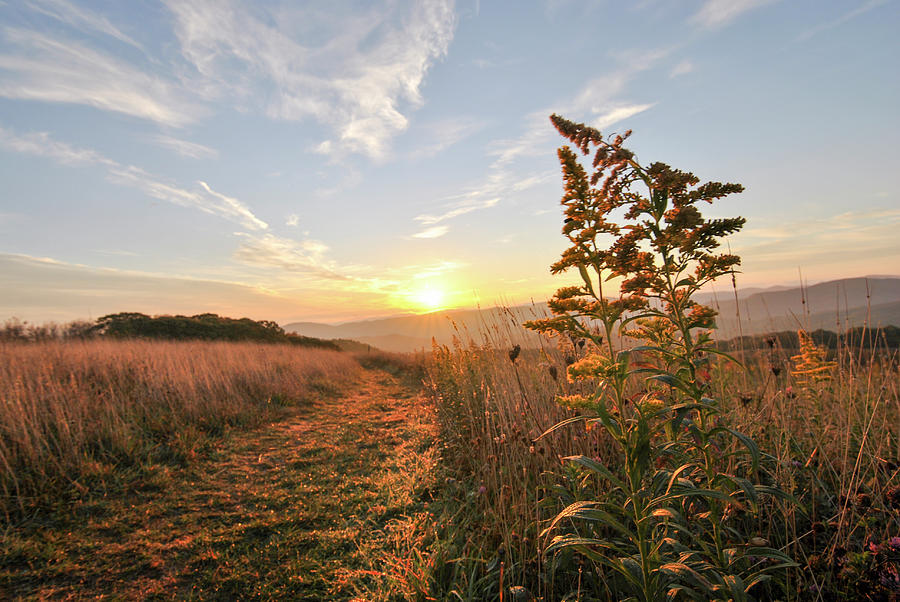 Golden Landscape at Max Patch NC by Doug Ash