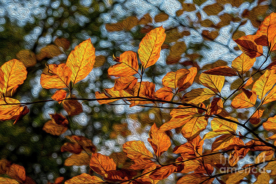 Golden Leaves In Oils Photograph