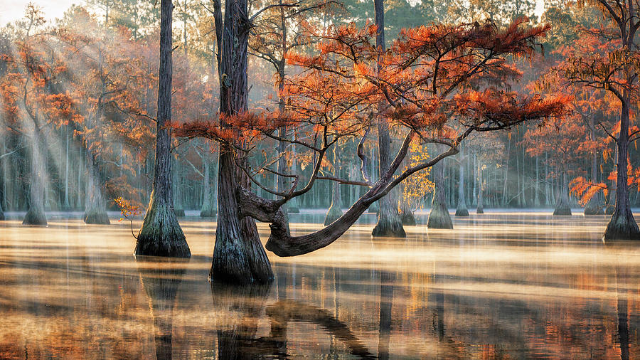 Golden Light at Cypress Swamp by Alex Mironyuk