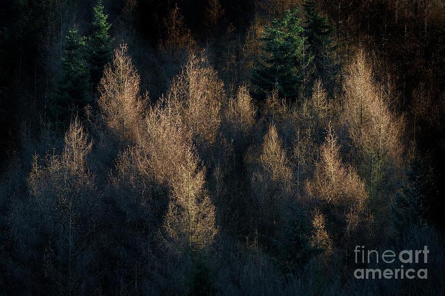 Golden light by Janet Burdon