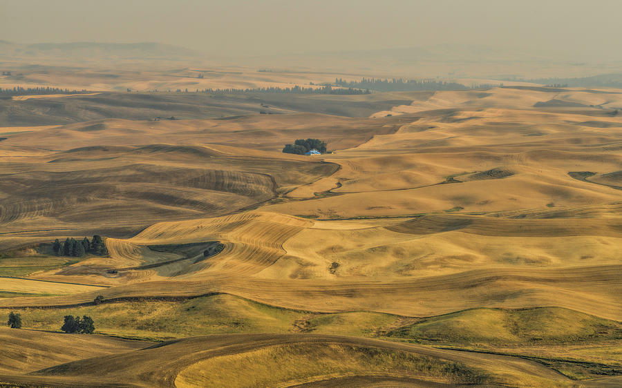 Palouse Photograph - Golden Light by Mike Herdering