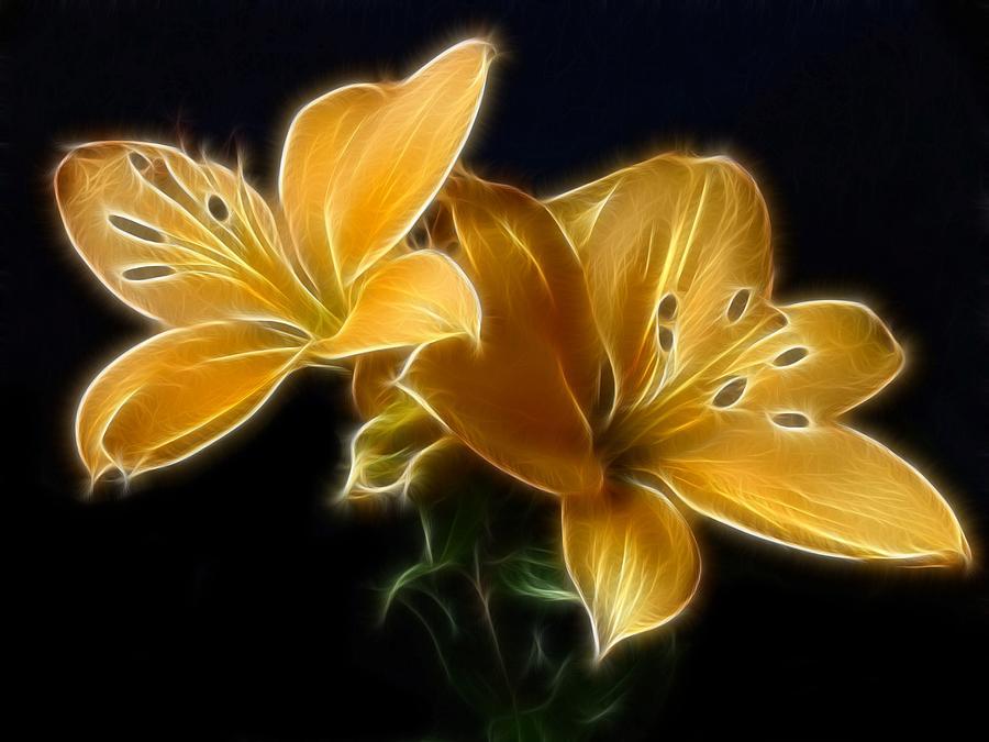 Lilies Digital Art - Golden Lilies by Sandy Keeton
