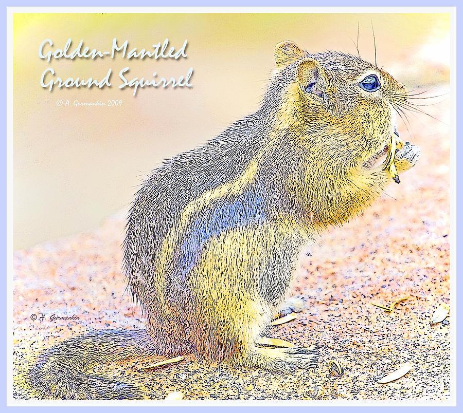 Animal Digital Art - Golden-mantled Ground Squirrel, Digital Art by A Gurmankin