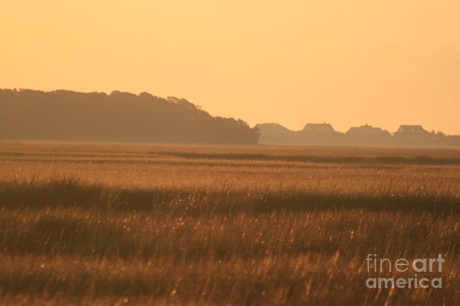 Marsh Photograph - Golden Marshes by Nadine Rippelmeyer