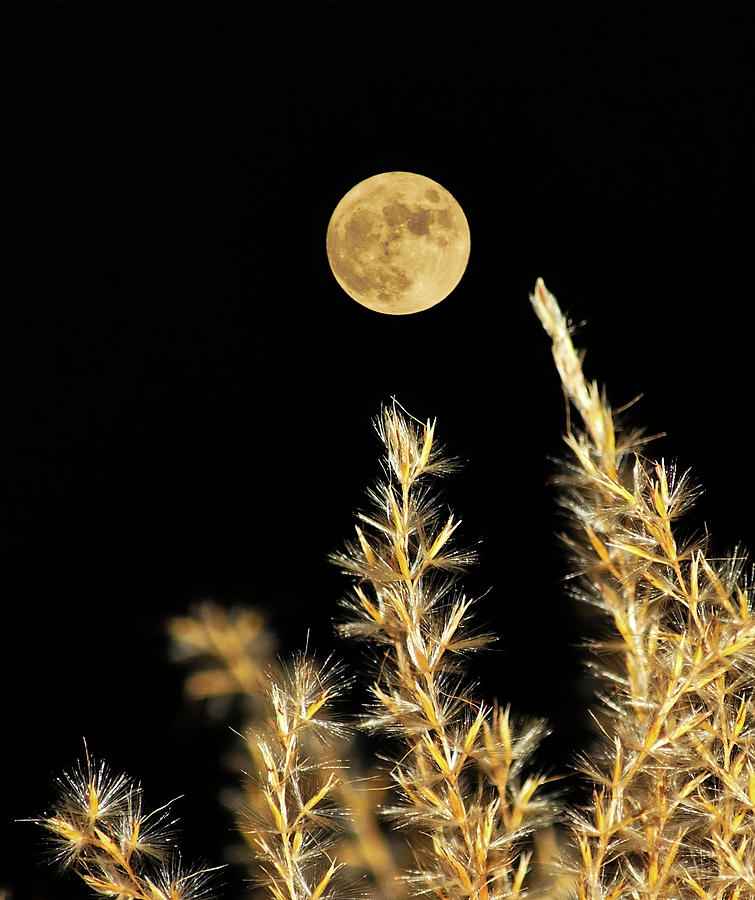 Golden Moon by Jeff Galbraith