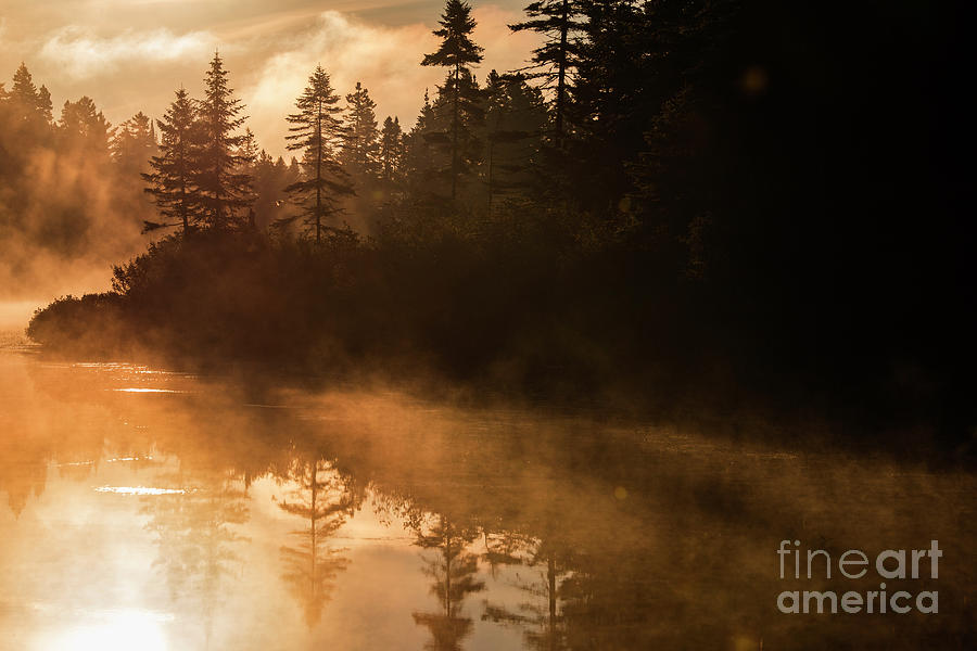 Golden Morning by Mircea Costina Photography
