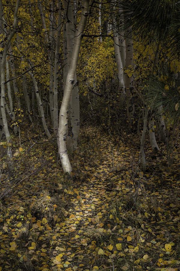 Golden Path by Dusty Wynne