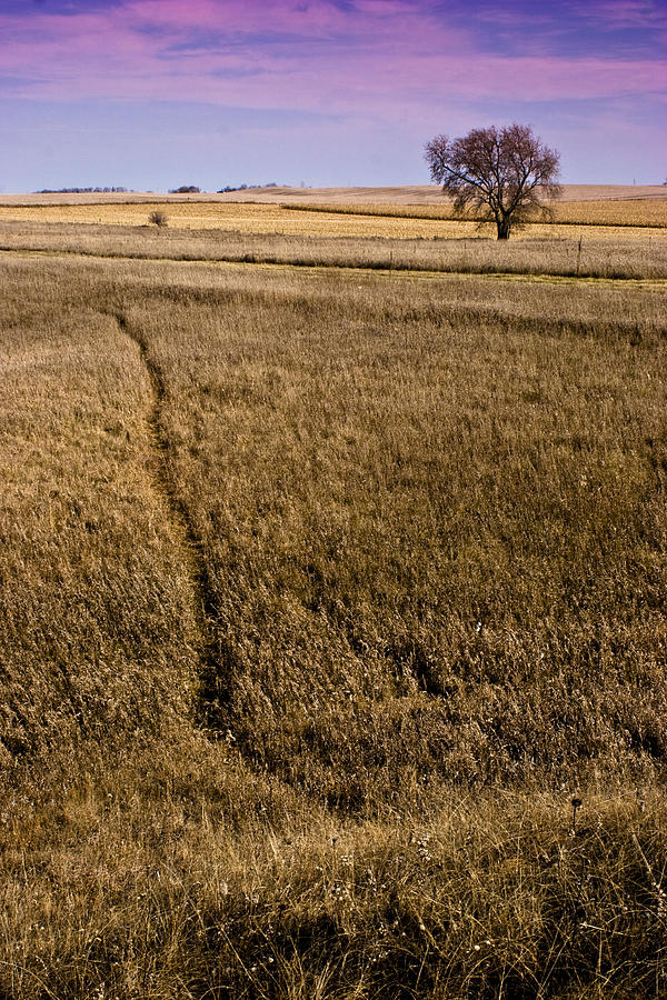 Landscape Photograph - Golden Path by Ian Van Schepen