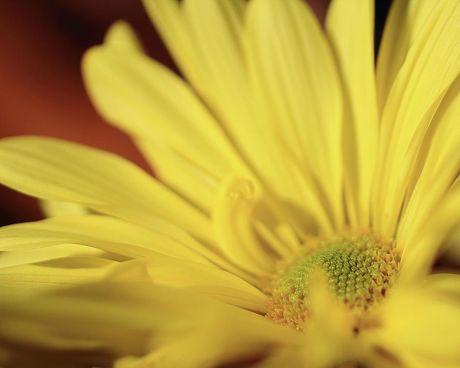 Petal Photograph - Golden Petals by Brian Pflanz