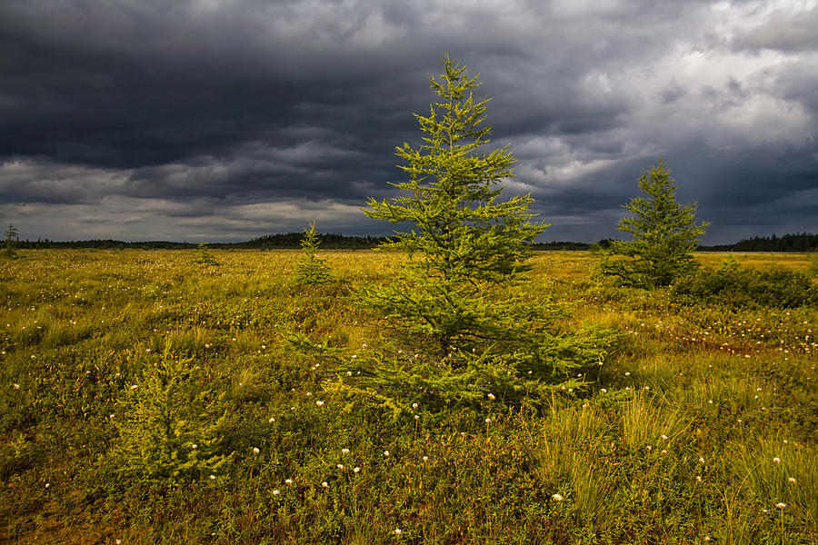 Storm Clouds Photograph - Golden Plains by Irwin Barrett