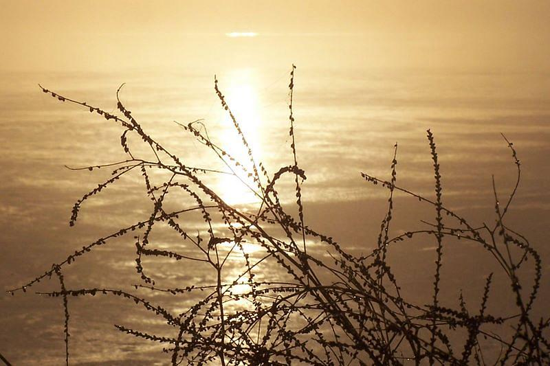 Golden Photograph - Golden Pond by Laurie Prentice