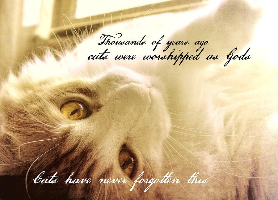 Cat Photograph - Golden Quote by JAMART Photography