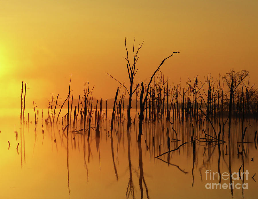 Gold Photograph - Golden Reflections by Roger Becker