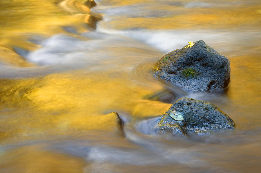 Leaves Photograph - Golden Refuge by Mike  Dawson