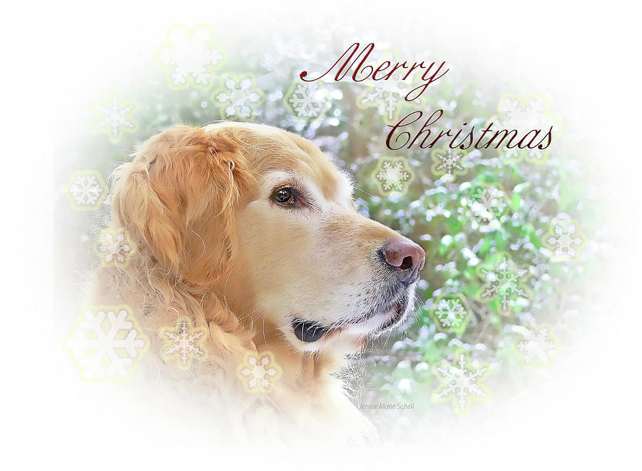 golden retriever photograph golden retriever dog merry christmas card by jennie marie schell
