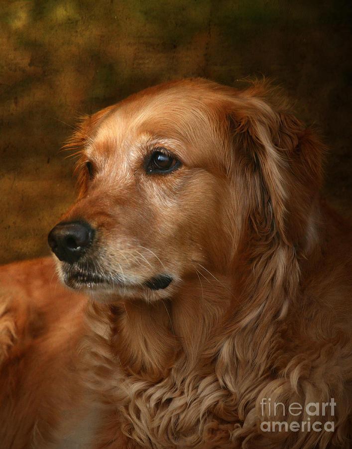 Dog Photograph - Golden Retriever by Jan Piller
