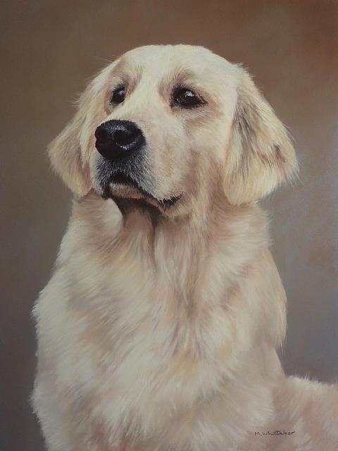 Golden Painting - Golden Retriever Portrait by Mark Whittaker