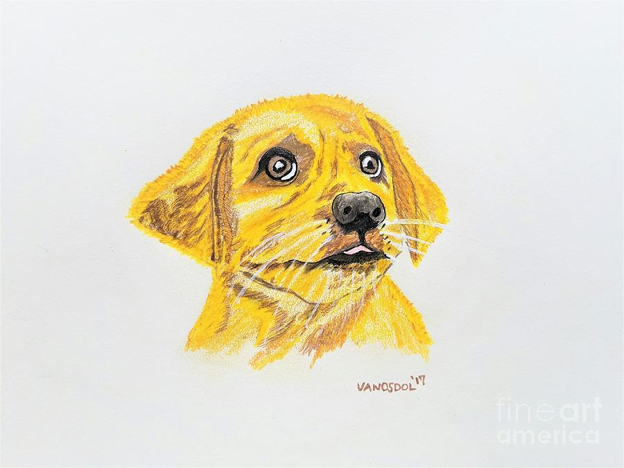golden retriever puppy dog colored pencil drawing by scott d van osdol