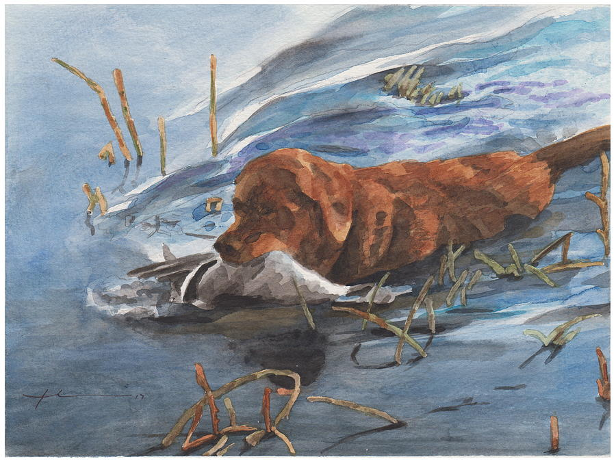 Golden Retriever With Duck Drawing by Mike Theuer